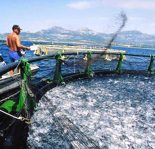 Крымчанам рассказали о новых возможностях осуществления рыбоводческой деятельности в России